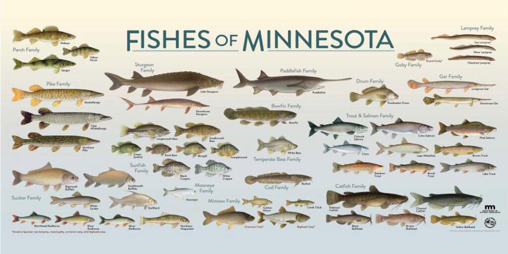 Fishing Supplies in Minnesota